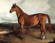 American Eclipse, an American racehorse who lived from 1814 to 1847