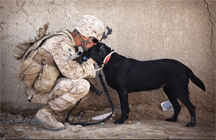 Mutual respect between a soldier and a military canine