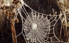 A frost-covered spider web