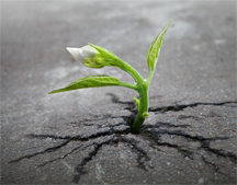 A sprout coming up in asphalt