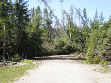 Timber blowdown in the Beaverhead-Deerlodge National Forest
