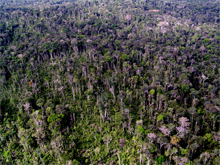 A stretch of the Amazon rain forest showing storm damage