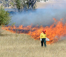 Firefighter lighting grass using a drip torch