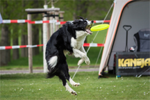 A dog playing catch with a disc