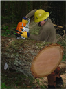 A man using a chainsaw