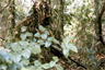 "A U.S. Marine sniper wearing sniper camouflage gear known as a ""ghillie"" suit"