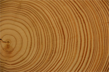 "Tree rings, ""documentary"" evidence of past environmental conditions"
