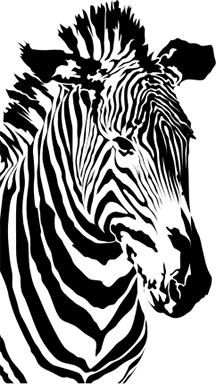 The zebra effect chaco canyon consulting a zebra fandeluxe Gallery